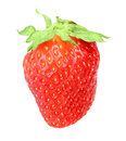 One berry fresh strawberry green leaf isolated white background close up studio photography Stock Photos