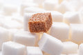 One brown sugar lump in front of lots of white cubes backlit Stock Image
