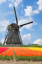 One dutch windmill over tulips field in sunny day netherlands Royalty Free Stock Image