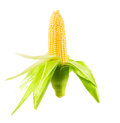 One on ear of corn Royalty Free Stock Photo