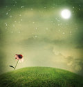 One echinacea flower under the moon on a fantasy hilltop Royalty Free Stock Image