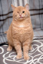 A one-eyed cat Royalty Free Stock Photo