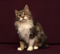 One-eyed, fluffy cat Royalty Free Stock Photo