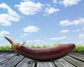 One fresh eggplant Royalty Free Stock Photo
