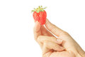One fresh strawberries in human hand on white background. Royalty Free Stock Photo