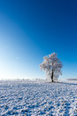 One frozen tree in the middle of field covered by snow