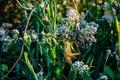 one orange grasshopper on reeds in the swamp