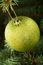 One gold christmas ball hanging on a tree green Stock Photos