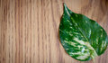 One Green Leaf On Side Royalty Free Stock Photo