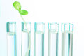One Green Plant In Test Tube F...