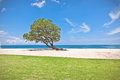 One green tree on the beach growing a deserted Royalty Free Stock Image