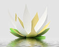 One green white waterlilly blossom on water level Royalty Free Stock Images