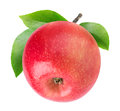 One isolated apple with stem Royalty Free Stock Photo