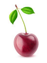 One isolated cherry Royalty Free Stock Photo