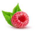 One isolated raspberry with leaves Royalty Free Stock Photo