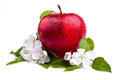 One Juicy Red Apple and flowers Royalty Free Stock Images