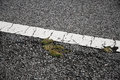 One mottled line on the city road for blessing and happiness Royalty Free Stock Photography