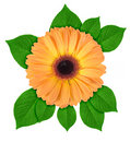 One orange flower with green leaf Royalty Free Stock Photo