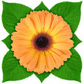 One orange flower with green leaf Stock Images