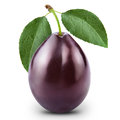 One plum Royalty Free Stock Images