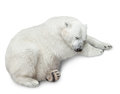 One polar bear cubs sleep over white background Stock Photo