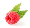 One raspberry with leaf isolated on white background macro Royalty Free Stock Photo