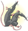 One rat scratches another rat s back Royalty Free Stock Images