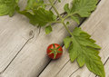 One Red Cherry Tomato Royalty Free Stock Photo