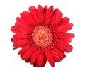 Uno flor