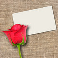 One red rose and message-card Stock Photo