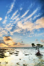 One reef florida keys islands sunrise florida keys usa Stock Photography