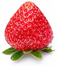 One rich strawberry fruit isolated on a white. Royalty Free Stock Photo