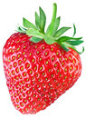 One rich strawberry fruit. Royalty Free Stock Photo