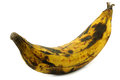 One ripe baking banana (plantain banana) Royalty Free Stock Photo