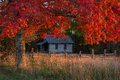 One room school, autumn reds, cumberland gap national park Royalty Free Stock Photo