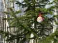 One sharp christmas ball on the fir-tree. Royalty Free Stock Photo