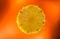 One slice of pineapple on orange background horizontal shot picture presents Stock Images