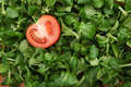 One slice of tomato in green mache lettuce Royalty Free Stock Photos