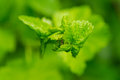 One small ants clamber on plant leaf macro photo focus ant body Royalty Free Stock Photos
