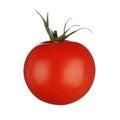 One tomato isolated on white background Stock Image