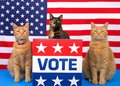 Patriotic election day cats at podium with vote sign
