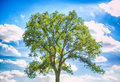 One tree a beautiful leafy against the cloudy sky Stock Photo