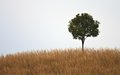 One tree on hill Royalty Free Stock Photos