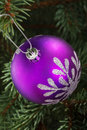 One violet christmas ball hanging on a tree green Royalty Free Stock Photo