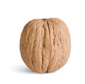 One walnut on white background Royalty Free Stock Photo