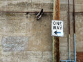 One way alley sign in an urban along an old building wall Stock Photo