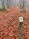 One way direction wooden signpost in forest autumnal Stock Image