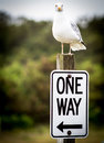 One way sea gull deciding sits on top of a sign Stock Photography