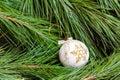 One white Christmas ball on  Christmas tree Royalty Free Stock Photo