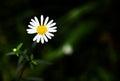 One White Flower In Black Back...